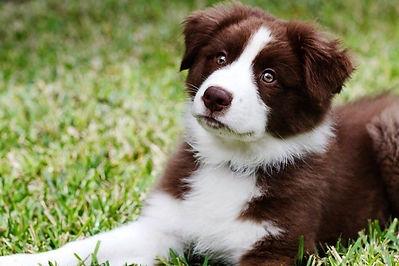 puppy pic.jpg