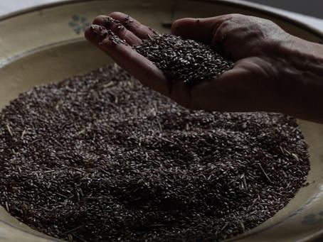 Post produzione del documentario sulla lavorazione tessile del lino a Teana