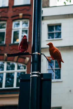 Uccelli in Soho