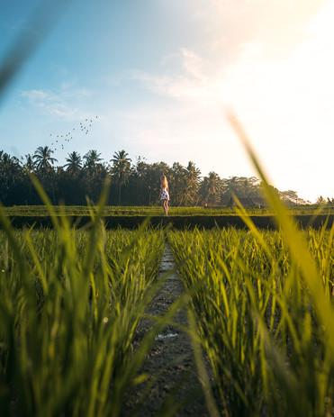 Between the rice.jpg
