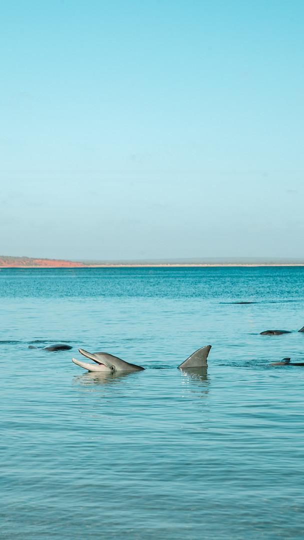 Wester Australia -.jpg