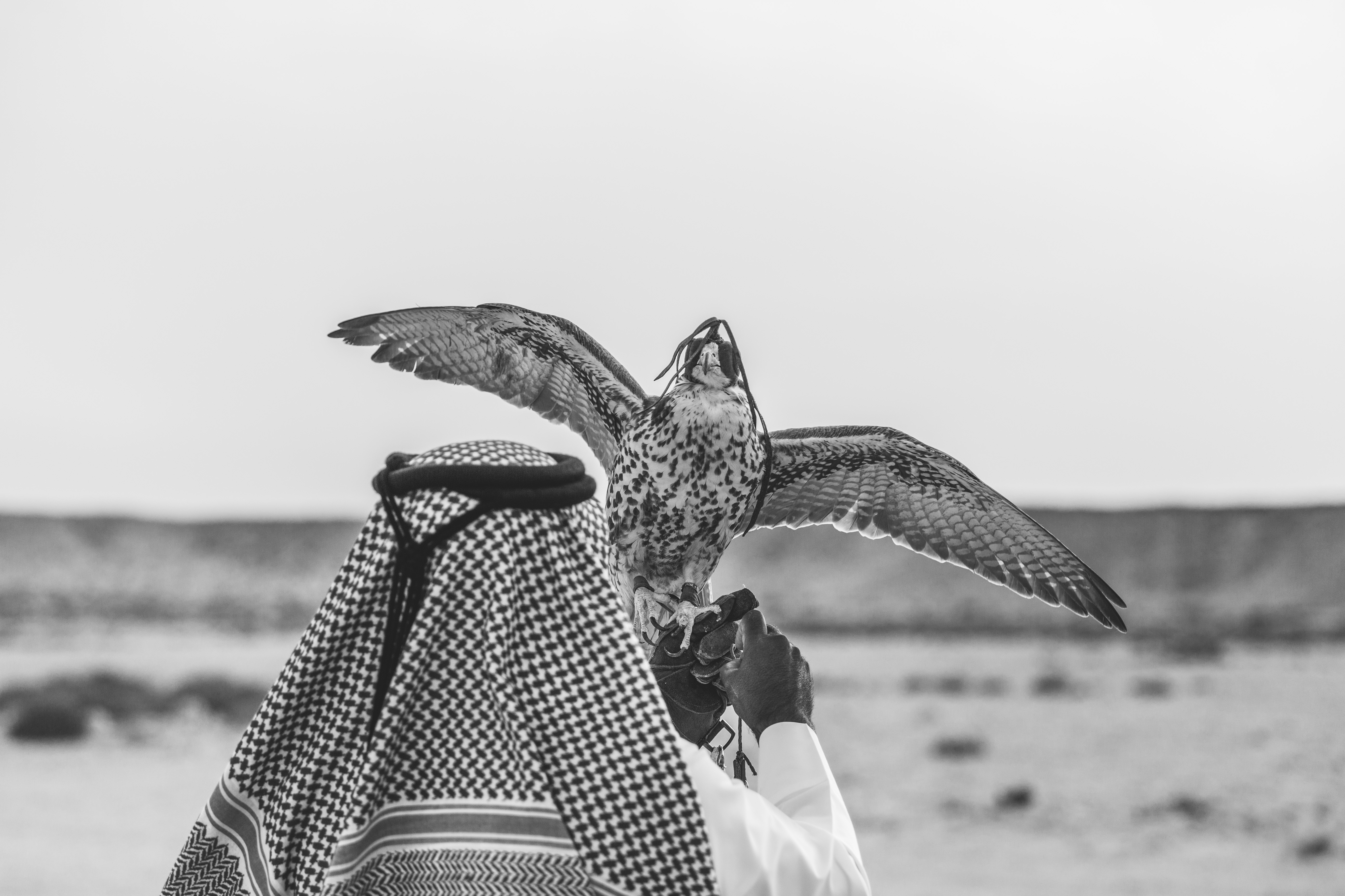 Ooredoo Falcon - By BrigFord -10