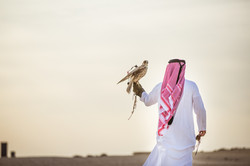 Ooredoo Falcon - By BrigFord -16