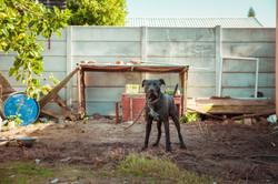 SPCA 1 By BRIGFORD -305