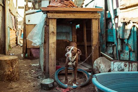 SPCA 1 By BRIGFORD -289.JPG