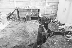 SPCA 1 By BRIGFORD -306