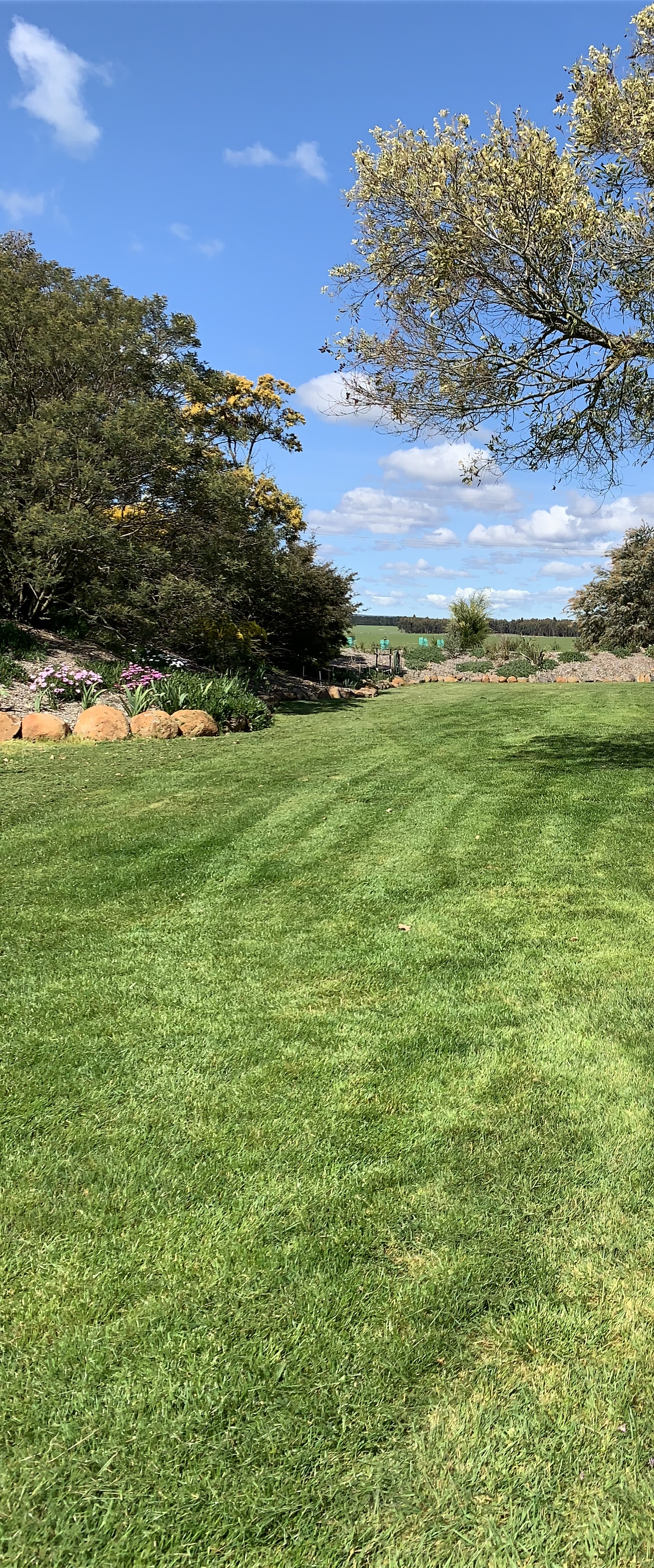 Tall Fescue Lawn Planted and Irrigated