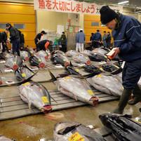 Radiation level in tuna off Oregon coast tripled after Fukushima, photo by Yoshikazu Tsuno © AFP  29 Apr, 2014