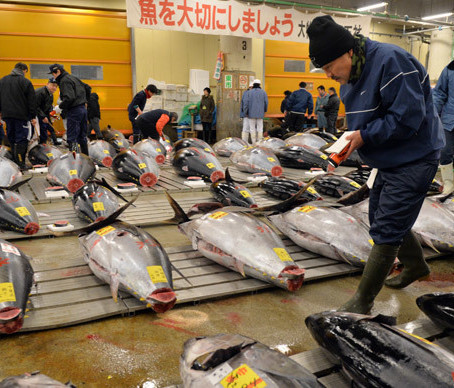 Radiation level in tuna off Oregon coast tripled after Fukushima, photo by Yoshikazu Tsuno © AFP  29 Apr, 2014