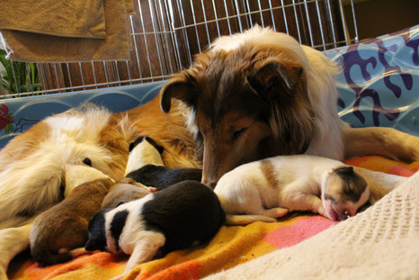 Ashni with her pups