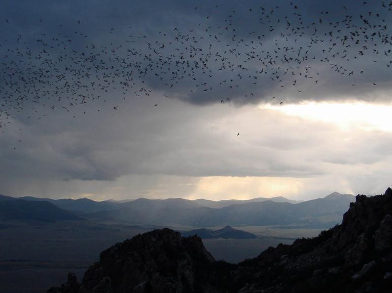 River of Bats