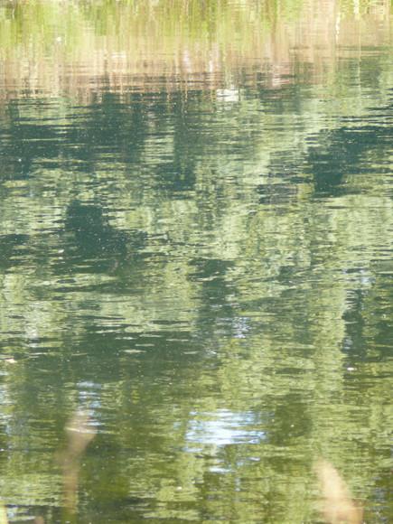 Pond Reflection Pattern