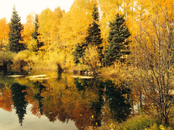 Visiting the Ponds in the Fall