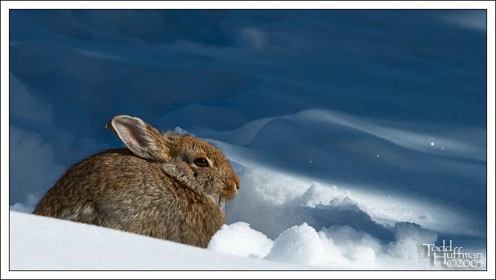Winter Wildlife
