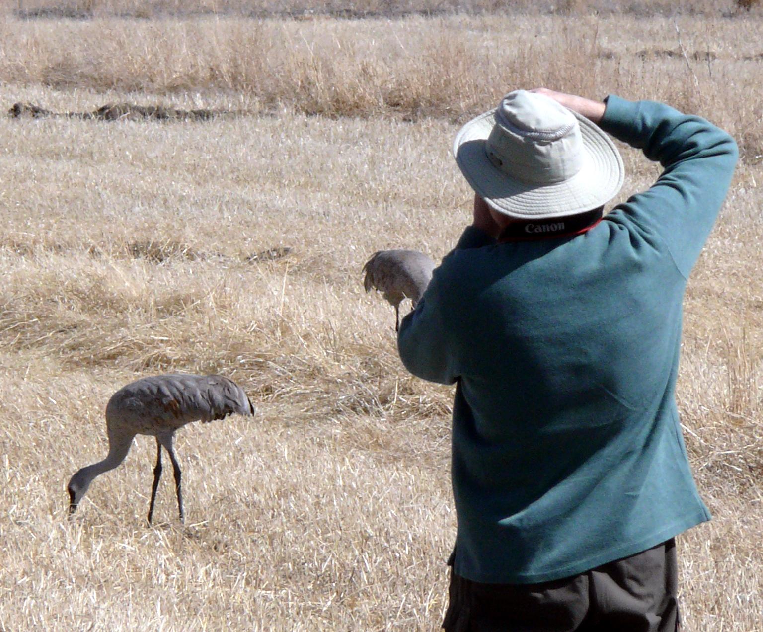 Colorado's Cranes