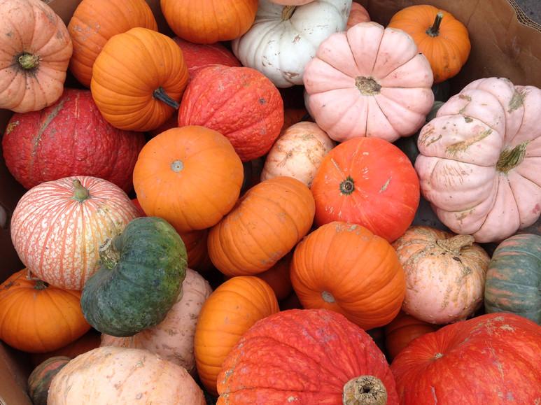 Pueblo Pumpkins