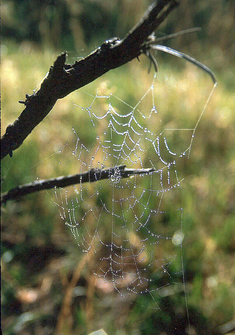Spider Web Rain Drops