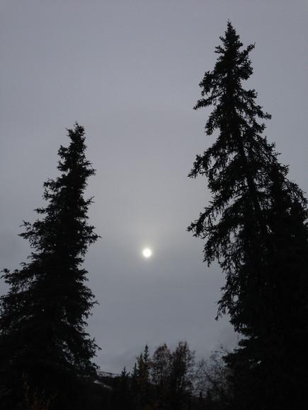 Denali Sun