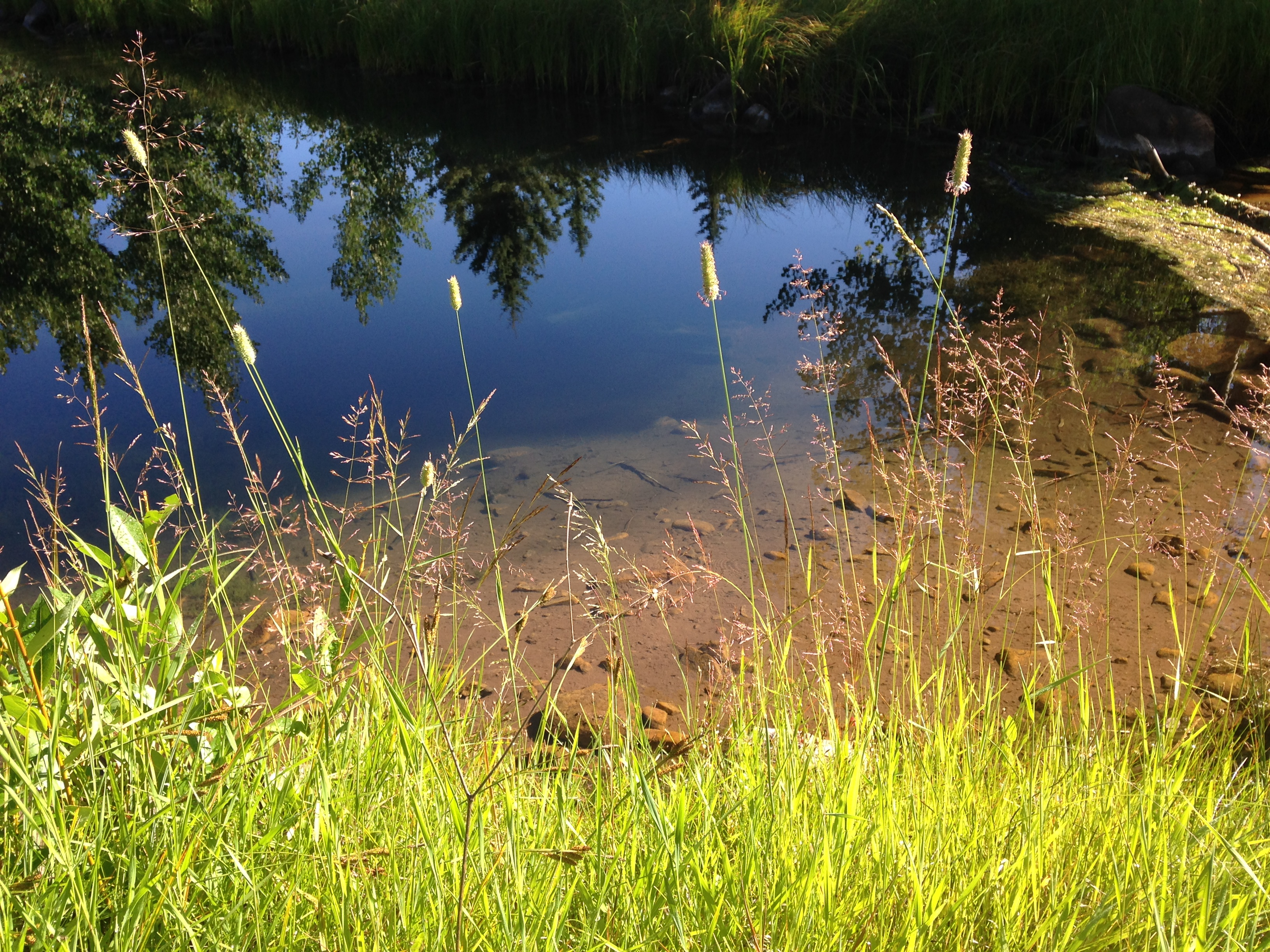 Visit the Ponds