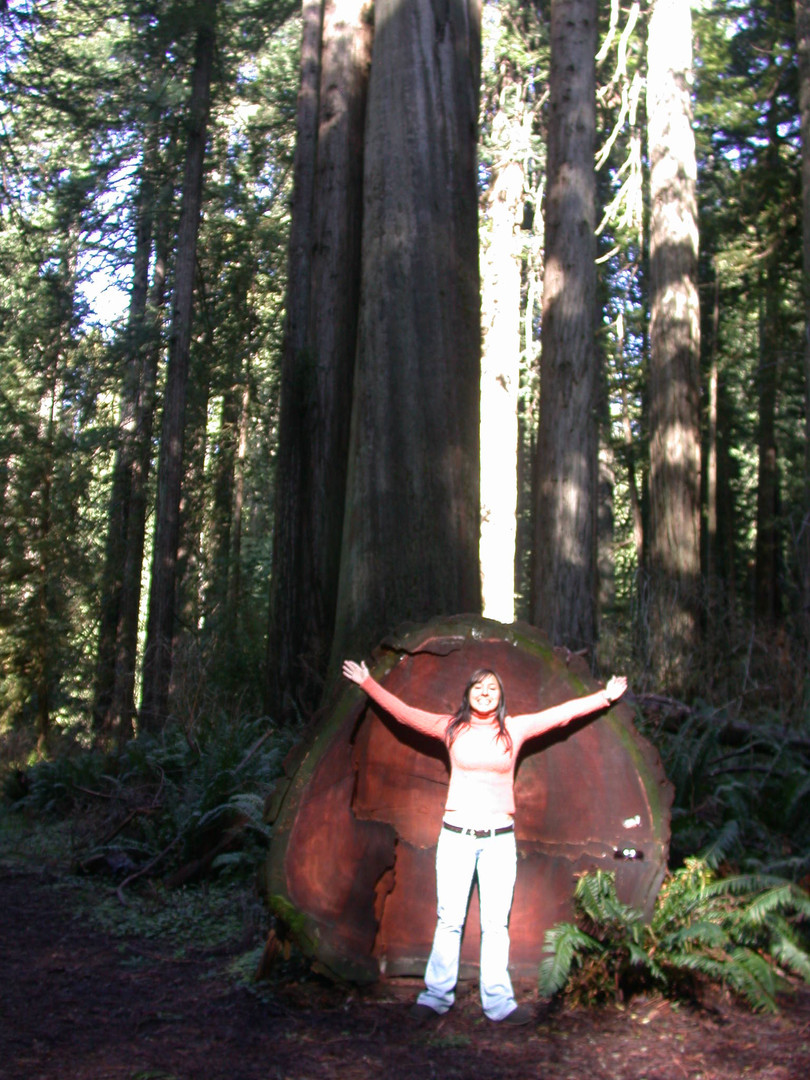 Redwoods Mermaid