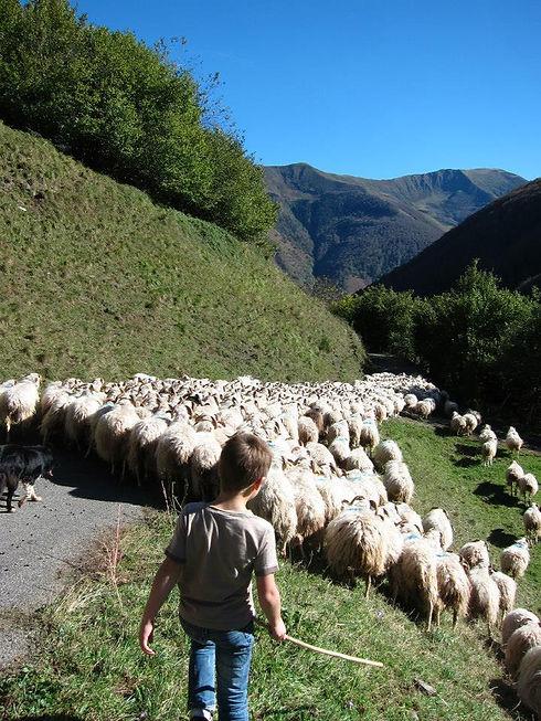 la vie de berger transhumant vallée d'aspe
