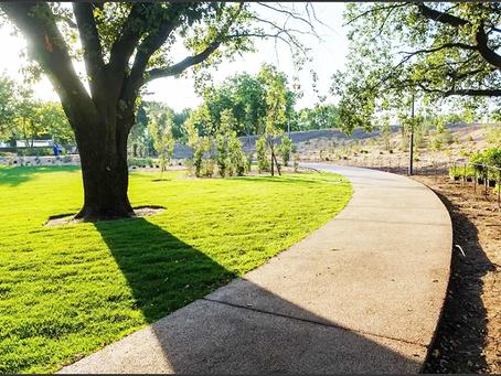 Novo espaço verde em Lisboa com mais de 1.000 árvores