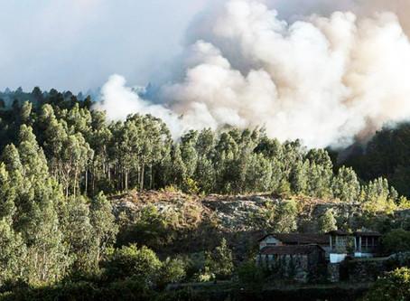 Incêndios: Chamas consumiram 2.100 hectares em Oliveira de Frades e Sever do Vouga