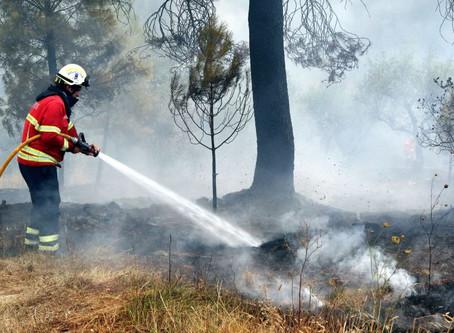 Mais de 170 operacionais  combatem fogo em Vila de Rei