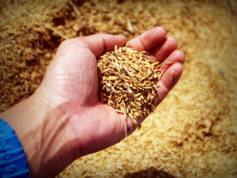rice-1549130_1920.jpg