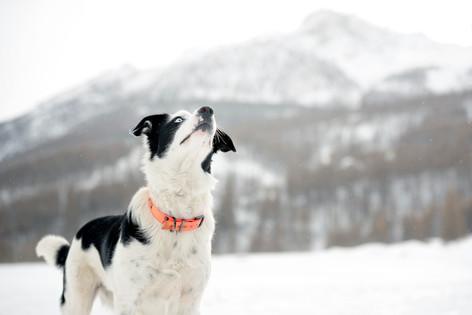 Nantwich Dog Photographer