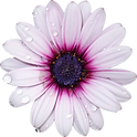 flowers-no-background-1.png