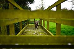Dog Photography Nantwich