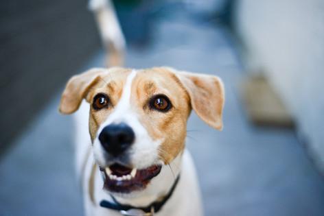 Cheshire Dog Photographer