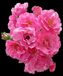 purepng.com-bunch-pink-rose-flowerflower