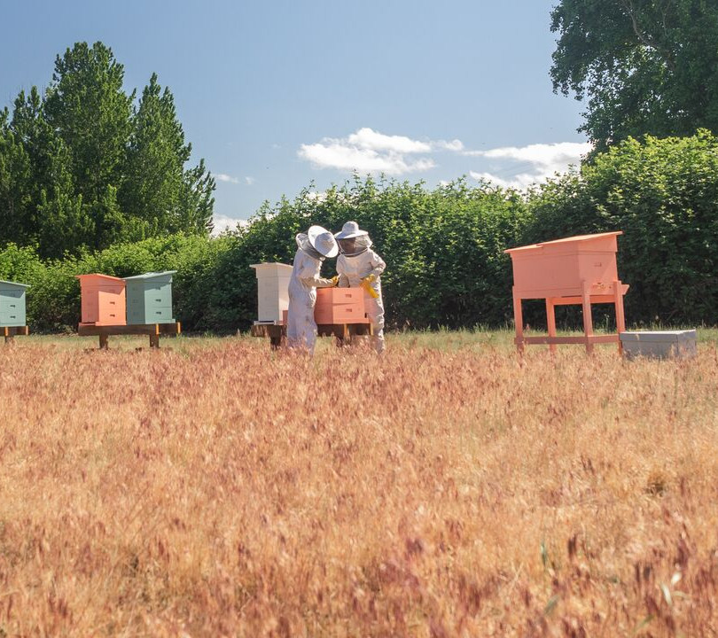 Bee & Bloom at Willow Bar Farm