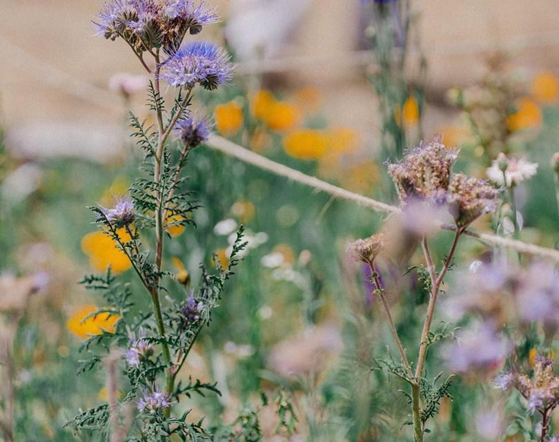 Native pollinators plantlife