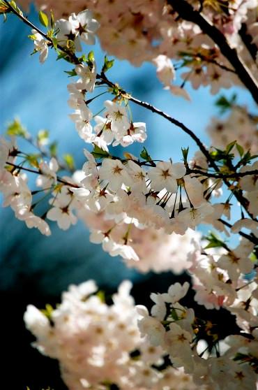 Swooning at Spring
