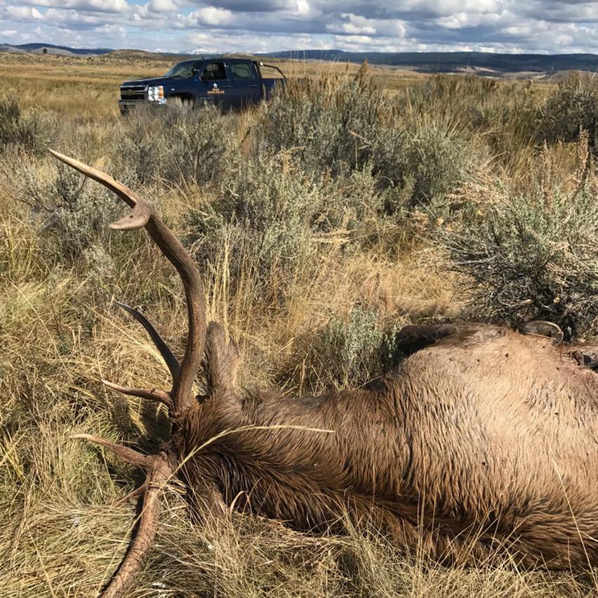 Poached Elk, OSP