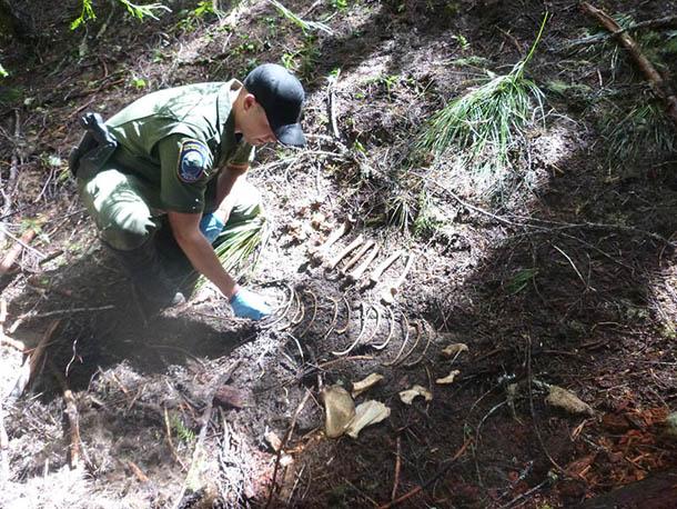 Poaching Investigation, OSP