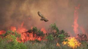 Wildlife Habitat Recovery Fund