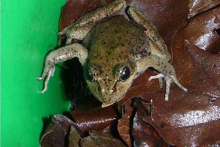 OWF Harborton Frog Shuttle project