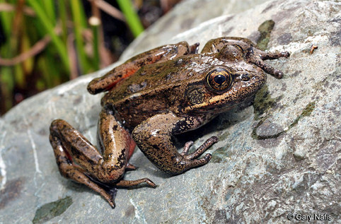 Harborton Frog Shuttle