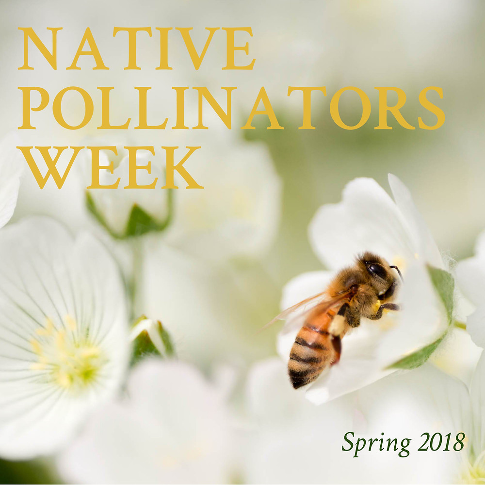 Oregon Wildlife Foundation Spring Pollinators Week