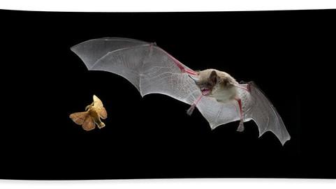 Going Bat Crazy