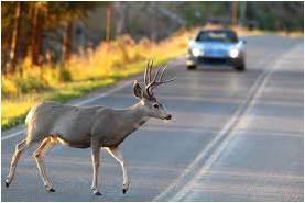 Gilchrist Wildlife Underpass update