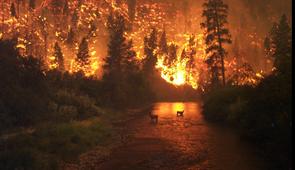 Wildlife & Wildfire