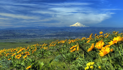 Conserving Oregon in unpredictable times