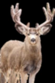 15603_ODFW_Wildlife Plate_2018-FINALdeer