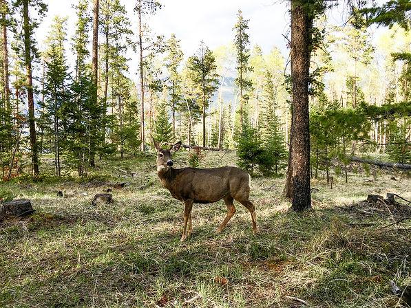 Gilchrist WildlifeUnderpss Projct