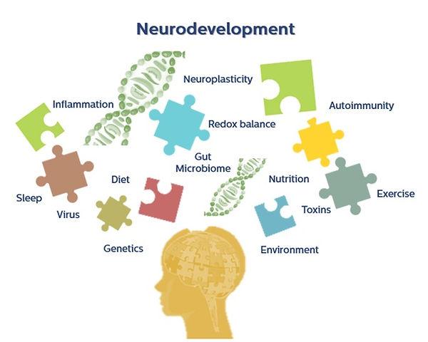 neurodevelopment.jpg